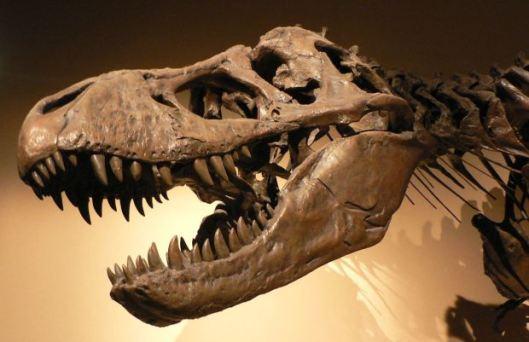 1280px-Palais_de_la_Decouverte_Tyrannosaurus_rex_p1050042