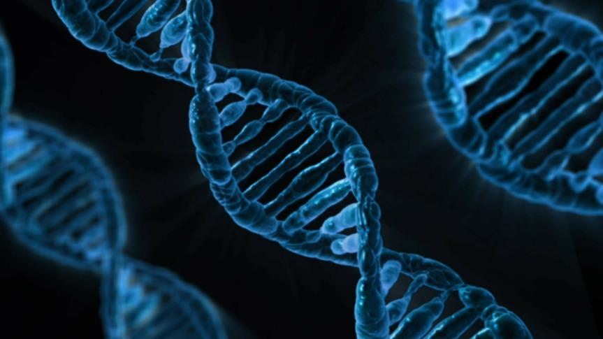 Obesità, diabete e cancro: scoperte le ragioni genetiche della lorocorrelazione